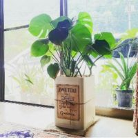 大型でも大丈夫!育てやすいおすすめ観葉植物3選!の画像