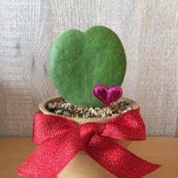 100均で買える安くて素敵な観葉植物をお部屋に飾ってみよう!の画像