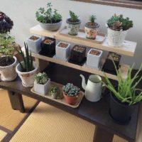 室内向けにピッタリな観葉植物のご紹介!の画像