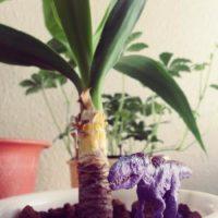 大型の観葉植物で育てやすい品種は?の画像