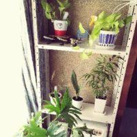 室内でも育てやすい観葉植物は?の画像