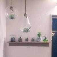 観葉植物が買えるおすすめのネットショップをご紹介!の画像