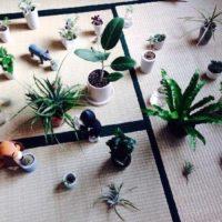 観葉植物のサイズに合わせた鉢を選びましょうの画像