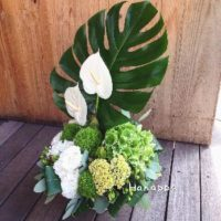 観葉植物をお祝い品として送る際のマナーは?の画像