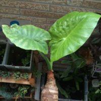 風水、運気、幸せを呼ぶ観葉植物たちって何がある!?の画像