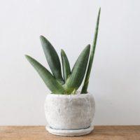 意外と簡単!お世話しやすい観葉植物3選!の画像