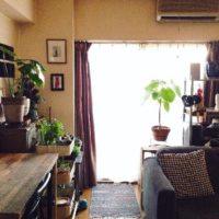 観葉植物、インテリアグリーンで部屋をおしゃれにの画像