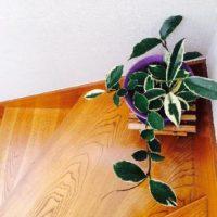 リビングにアクセント!葉っぱの大きい観葉植物の画像