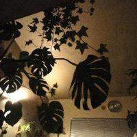 育てやすい大きい観葉植物 の画像