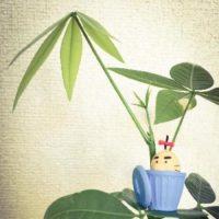 おすすめのミニチュアサイズの観葉植物をご紹介!の画像