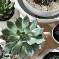 クーラーは観葉植物の敵!冷房をつけるときの育てるコツは?の画像
