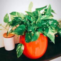 初心者でも大丈夫!室内で簡単に育てられる観葉植物 3選!の画像