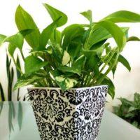 贈り物として人気のある観葉植物 3選の画像