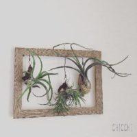 プレゼントにおすすめ!ミニ観葉植物のご紹介の画像