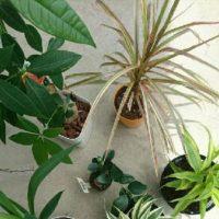 室内で育てやすい観葉植物ランキング!の画像