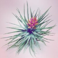インテリアにおすすめ!可愛いミニ観葉植物たちの画像