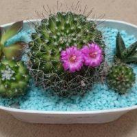インテリアに最適!ミニチュア観葉植物の画像