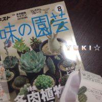 安い!お手頃!可愛い!通販で買えるおすすめ観葉植物の画像