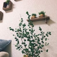 インテリアにおすすめ!大型観葉植物TOP3!の画像