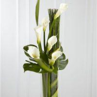 観葉植物のカラーの育て方の画像