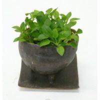 観葉植物をおしゃれに楽しむには、陶器の鉢がおすすめです。の画像