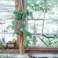 人はなぜ、植物を吊るすの!? だって、そこに眺めていたい植物があるから!の画像