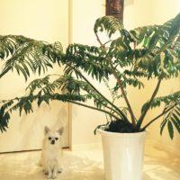 亜熱帯地域に育つ観葉植物でも夏に気をつけたい注意点の画像