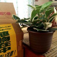 購入した観葉植物を配送するには?の画像
