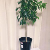育てやすい!おすすめの室内観葉植物の画像