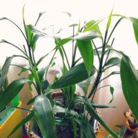 高級感のある観葉植物をご紹介!の画像