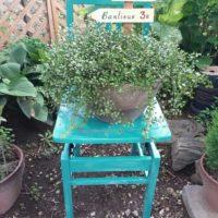 お部屋に鑑賞用の植物を飾ろう!の画像