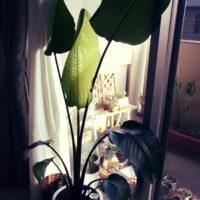 部屋をオシャレに!インテリアグリーンの観葉植物の画像