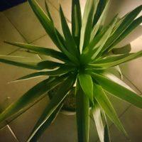 室内で育てたい!おすすめの観葉植物の画像