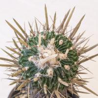 インテリアグリーンとしての観葉植物の置き方の画像