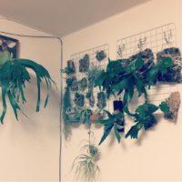 部屋のインテリアに観葉植物を検討しよう!の画像