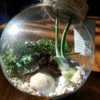 観葉植物をガラスのケースに入れて楽しむ、テラリウムの世界の画像