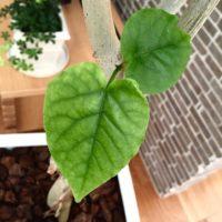 10号を超える大きさの観葉植物を育ててみよう!の画像