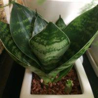 初心者におすすめの小さな観葉植物の画像