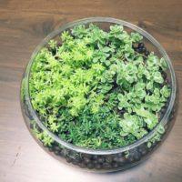 観葉植物を炭で育てる!炭植えハイドロカルチャーのやり方は?の画像