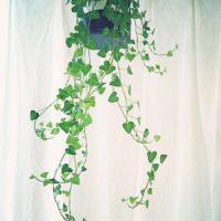 リビングをおしゃれに演出してくれる観葉植物3選の画像
