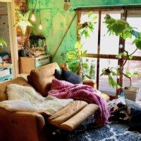 リビングに飾りたい観葉植物10選!風水に効果的な種類とは?の画像