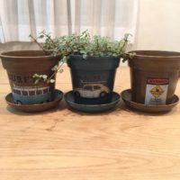 観葉植物にとってプランターは生死の分かれ道!の画像