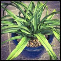観葉植物を買う前に!鉢の選び方についての画像