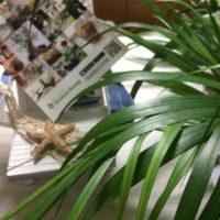 観葉植物でも人気の高いアレカヤシ。部屋に飾れば南国気分。の画像