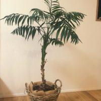 室内でも育てやすい観葉植物3選の画像