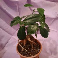 耐寒性のある観葉植物のご紹介!の画像