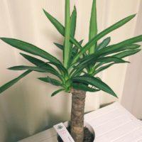 室内で育てやすい!観葉植物まとめの画像
