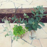 観葉植物を水差しで育てよう!の画像