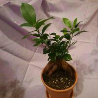 樹形タイプでおすすめの観葉植物をご紹介します!の画像