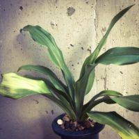 植木鉢にこだわって、ワンランク上の観葉植物をの画像